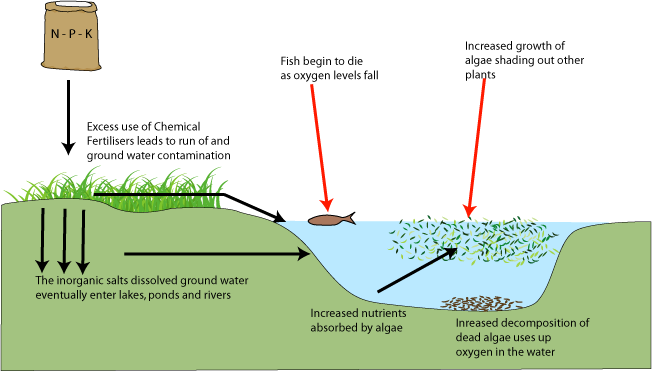 environmental-effects-eutrophication